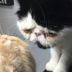 """<font color=""""red"""">Instagram Cat of the Moment:</font> Mattingly"""